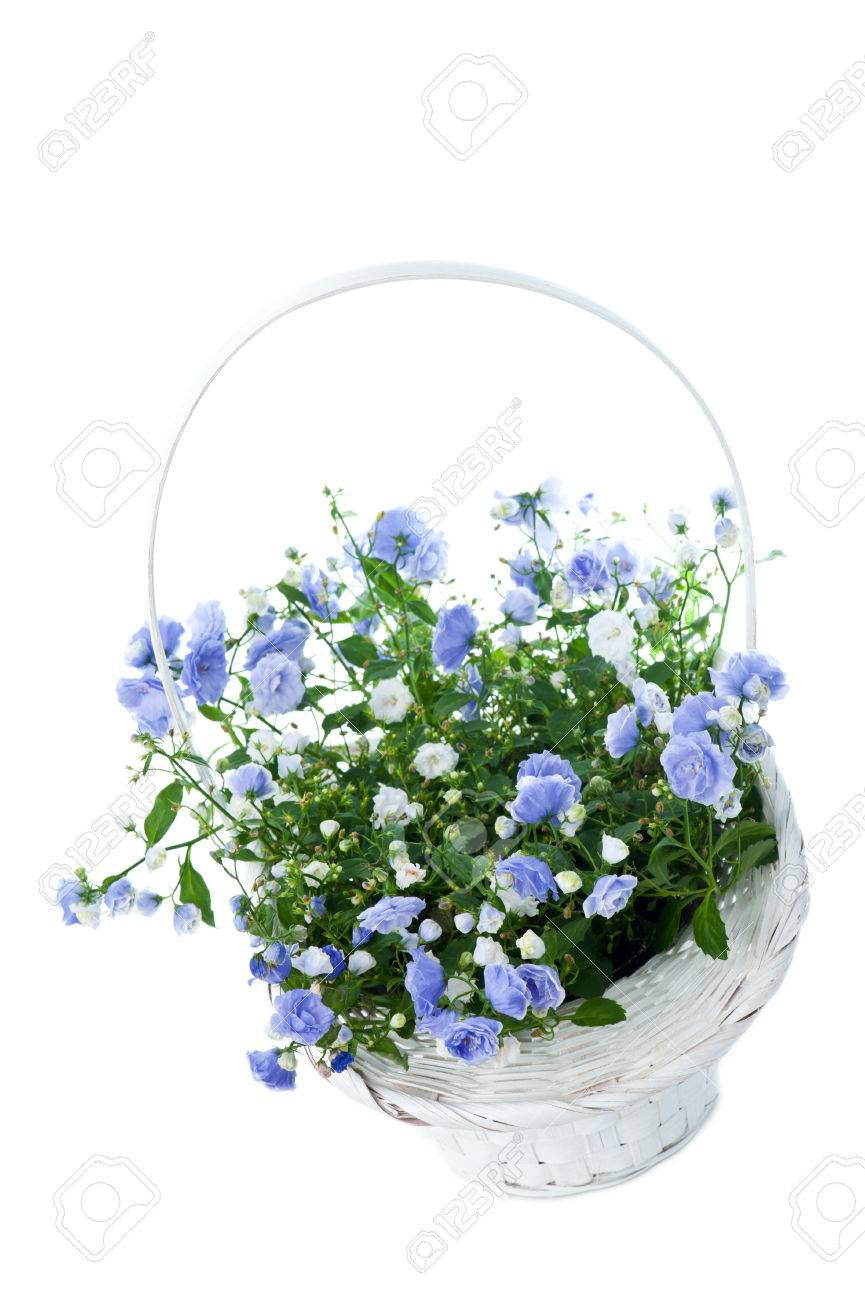 Bouquet Of Blue Spring Flowers In White Basket Isolated On White