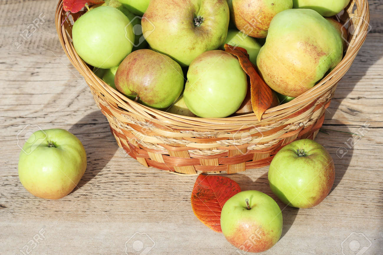 A basket of ripe apples stands on a wooden table in the fresh air - 157077902