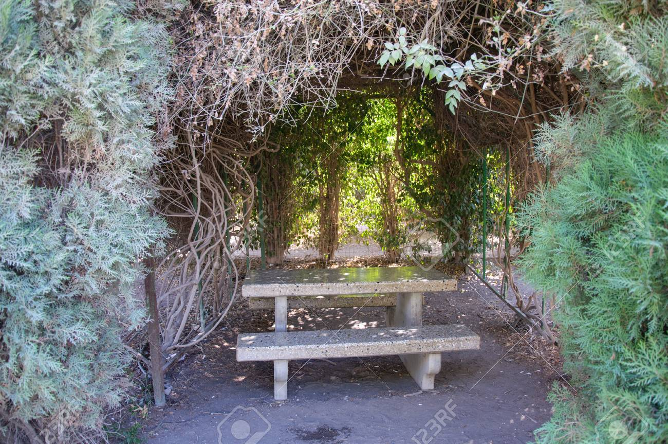 Stone Picnic Table Surrounding By Bushes And Trees Stock Photo - Stone picnic table