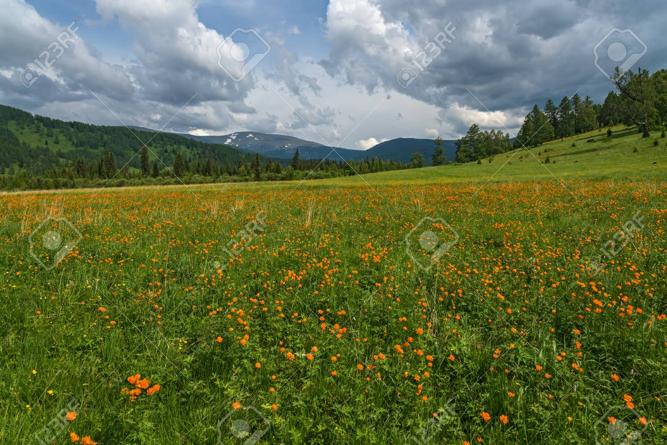 Beautiful Mountain Landscape With Orange Flowers In The Meadow
