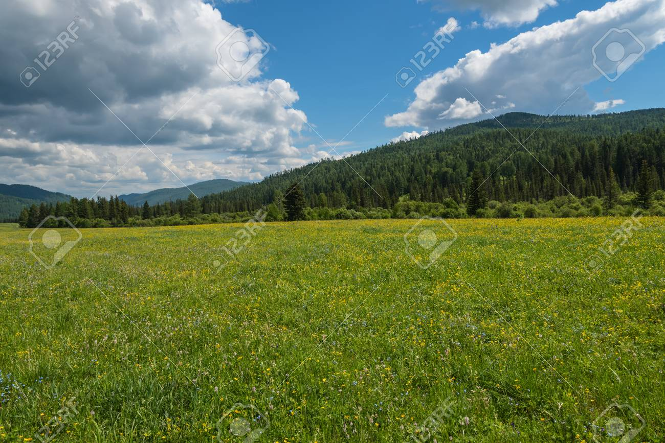 Beautiful Mountain Landscape With Wild Flowers In The Meadow Stock