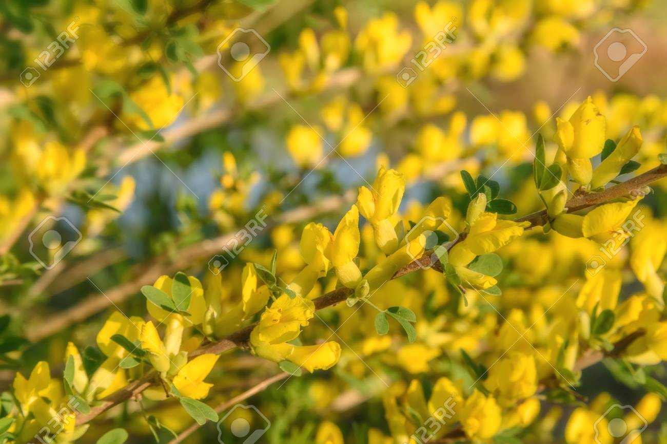 Bright Spring Floral Background With Beautiful Yellow Flowers