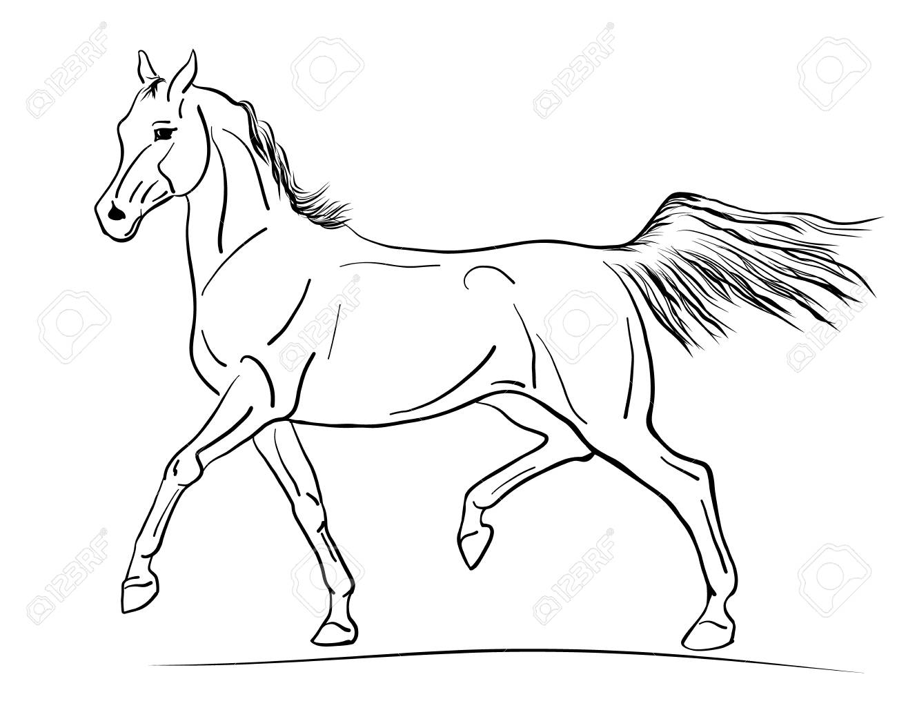 A Sketch Of A Trotting Arabian Horse Royalty Free Cliparts Vectors And Stock Illustration Image 111997685