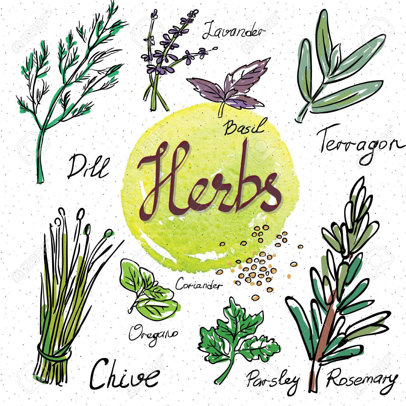 kitchen herbs and spices hand drawn sketch icons royalty free rh 123rf com lidia's kitchen herbs and spices recipes herbs and spices every kitchen should have