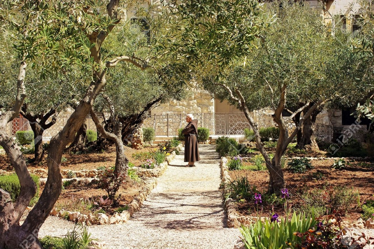 Garden Of Gethsemane Images Stock Pictures Royalty Free Garden