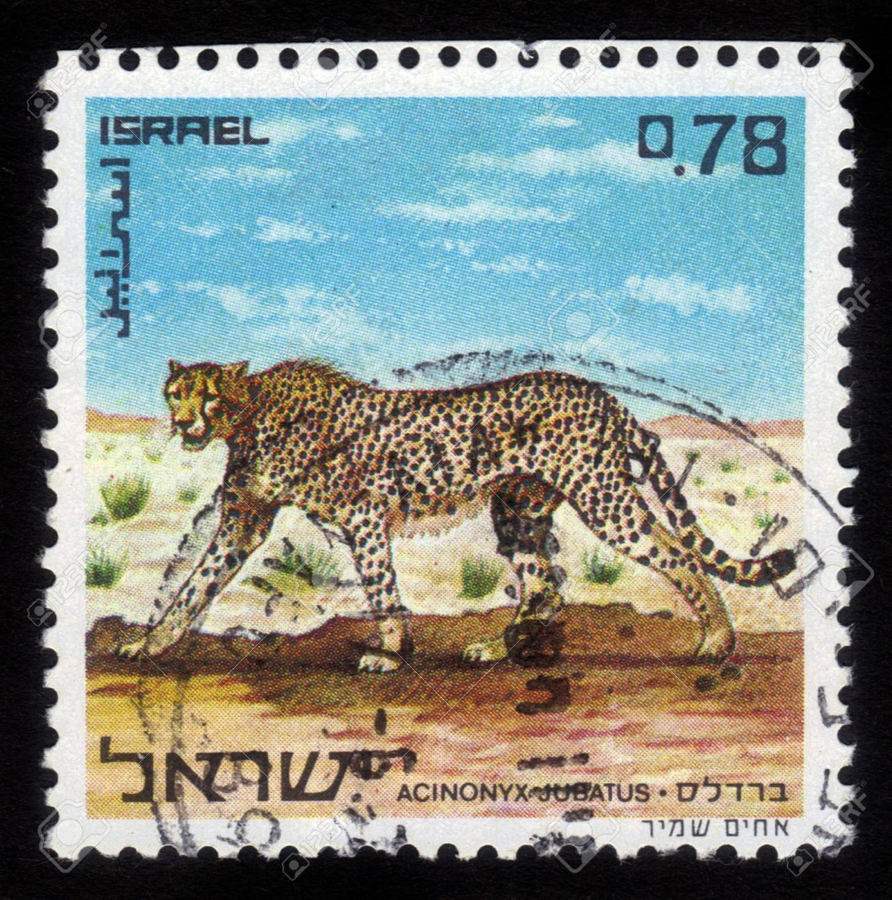 ISRAEL - CIRCA 1971  A stamp printed in Israel, shows image of a cheetah, the world s fastest land animal, circa 1971 Stock Photo - 14794678