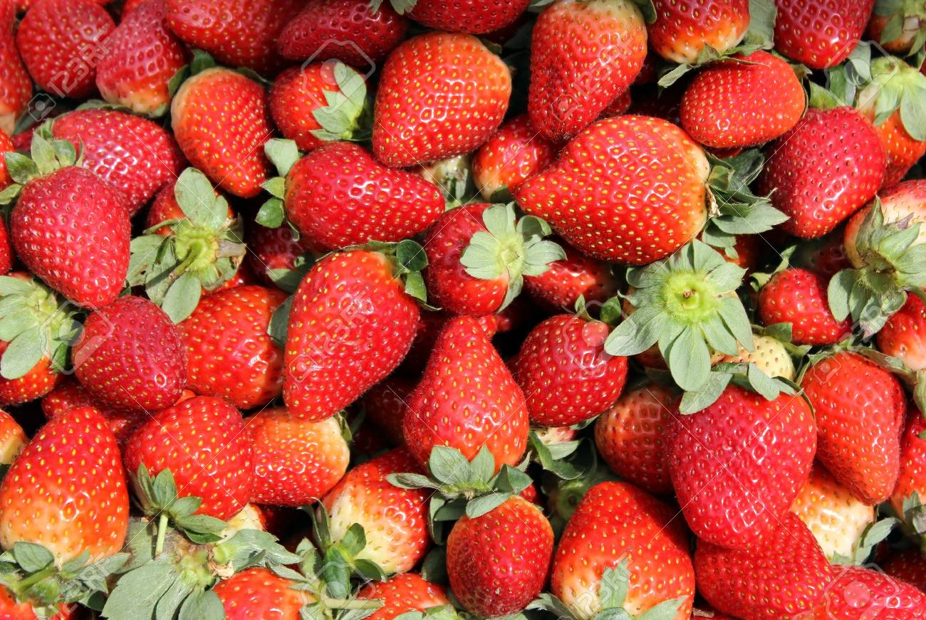 Fresh ripe of the berries of strawberry as food and agricultural backgrounds Stock Photo - 14898429