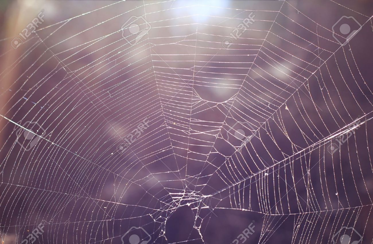 Spiderweb Images & Stock Pictures. Royalty Free Spiderweb Photos ...