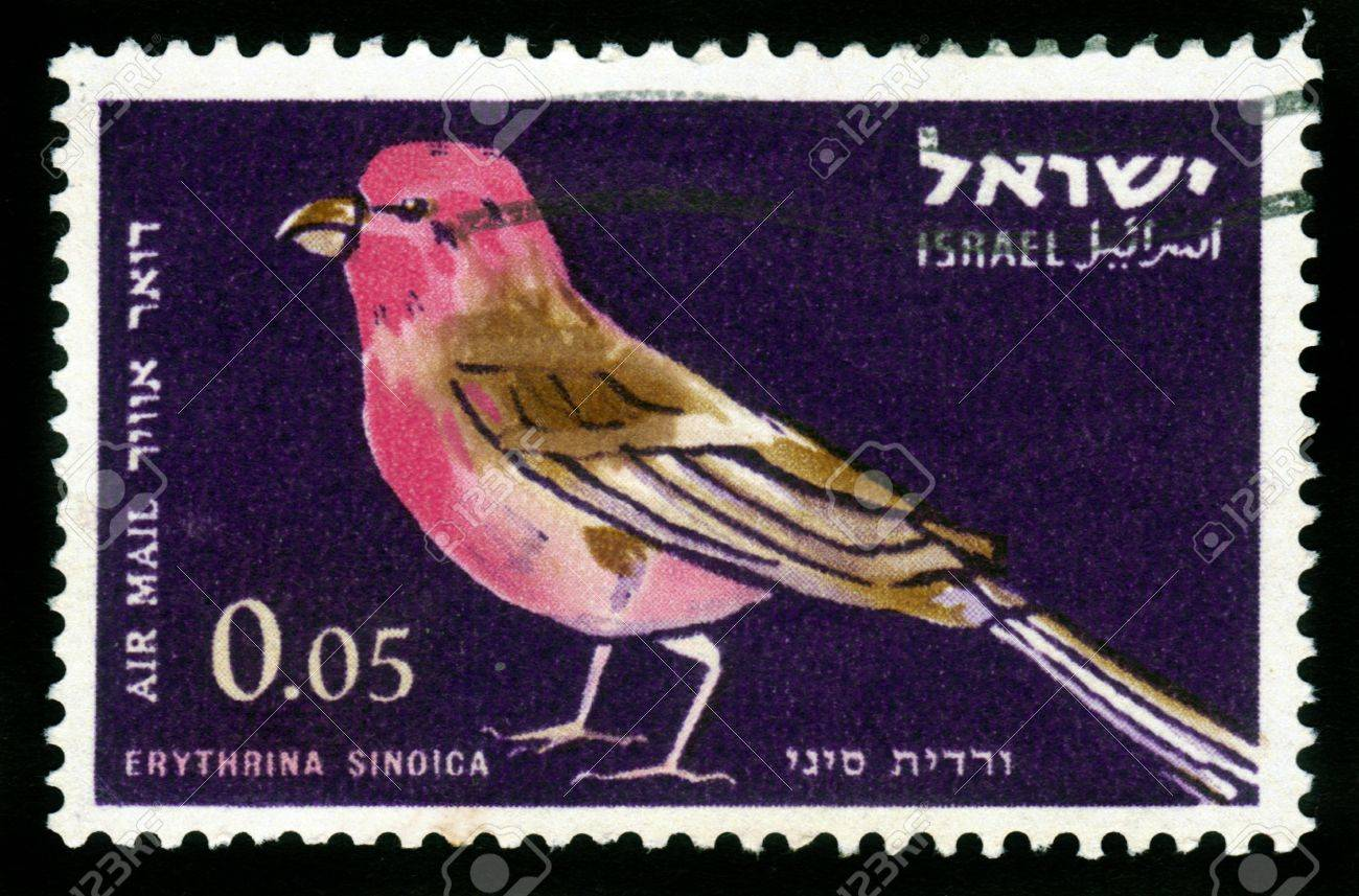 ISRAEL - CIRCA 1963: stamp printed in Israel, shows bird -sinai rose finch ( Erythrina SINOICA ),  living only in the southern Negev , circa 1963 Stock Photo - 16233026