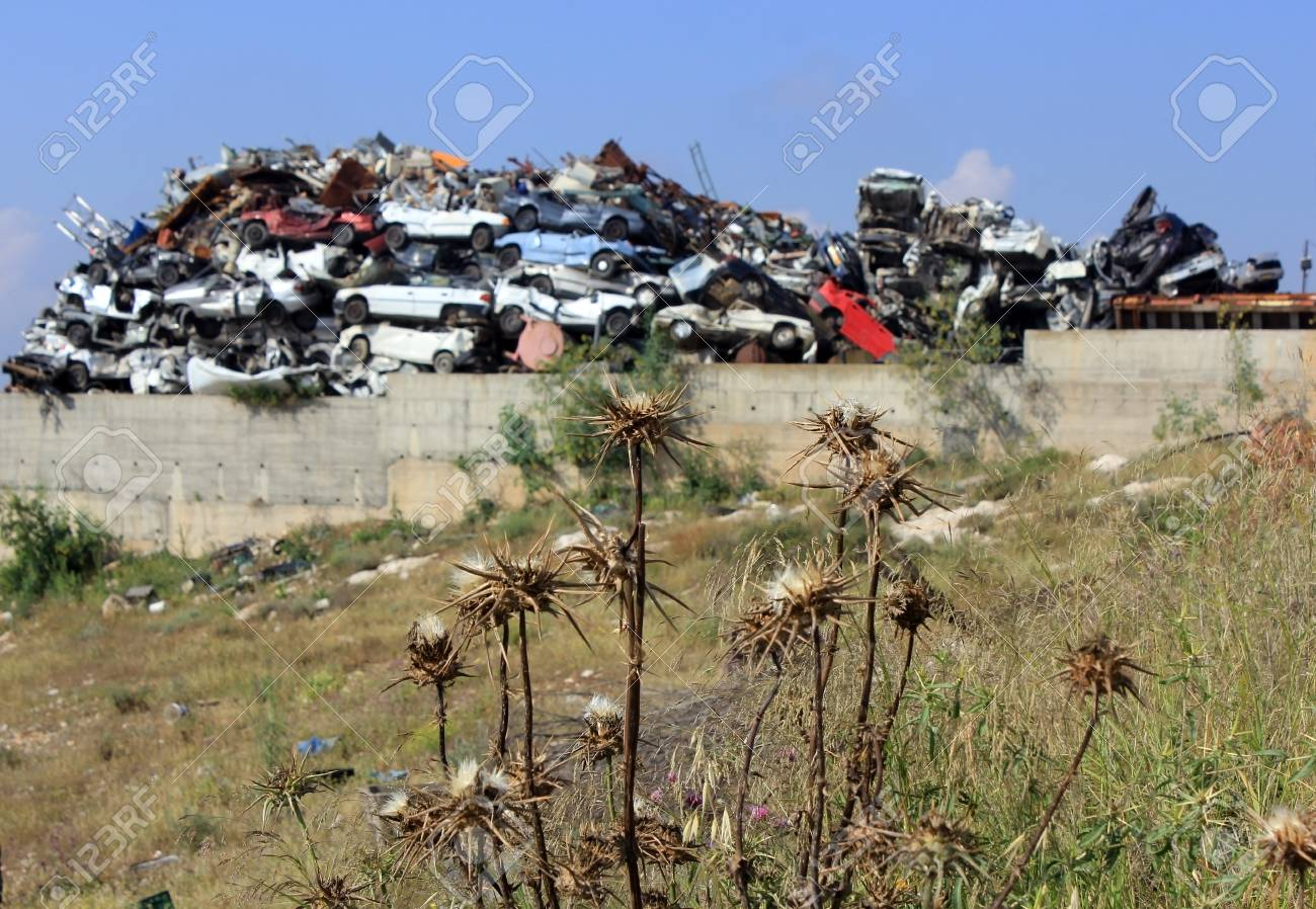 ecological concept by withered plant on the background of car dump Stock Photo - 19403593
