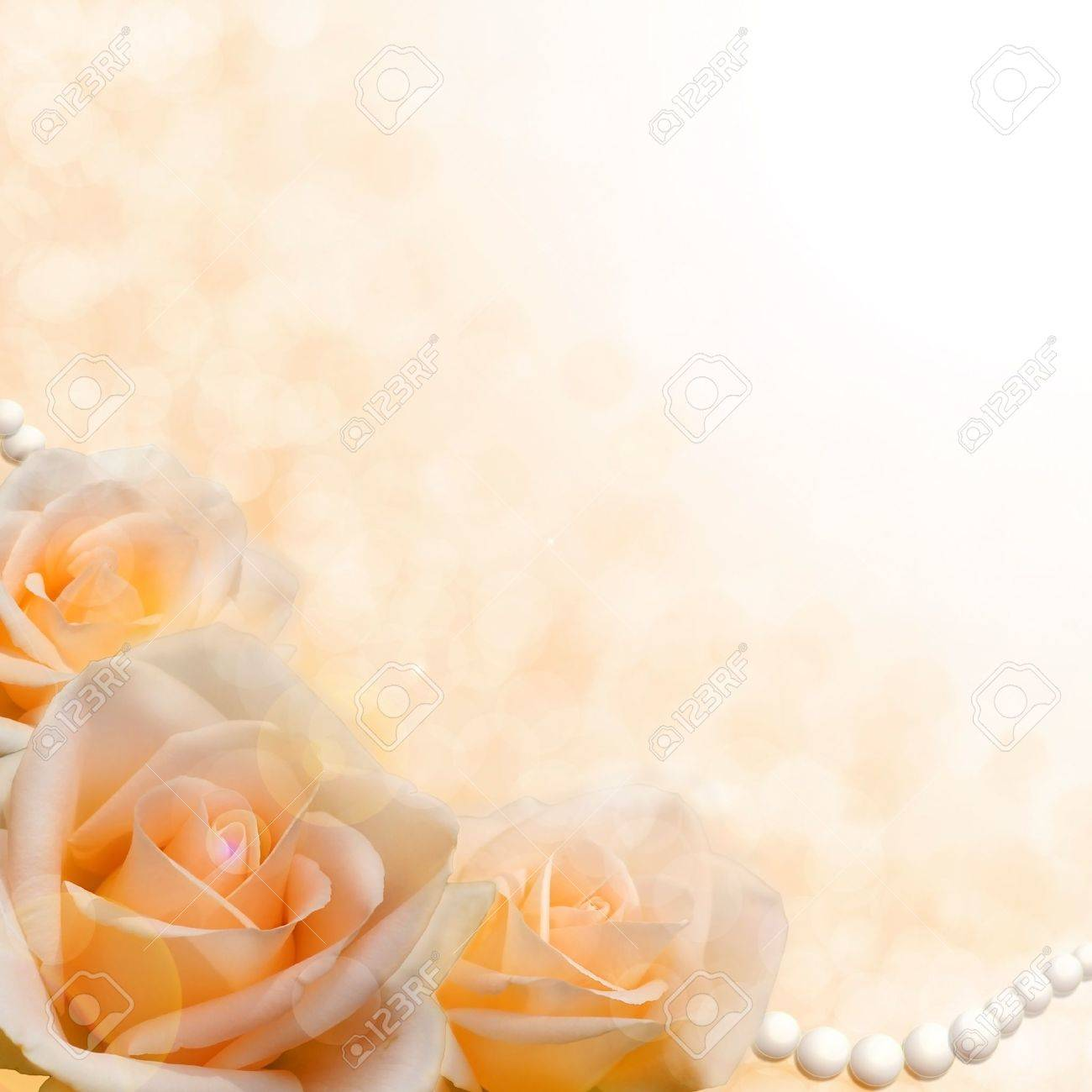 Beautiful Soft Cream Roses On Blurred Background As The Theme ...