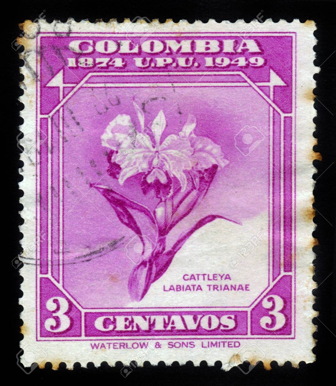 Colombia Circa 1950 Stamp Printed By Colombia Shows Flower
