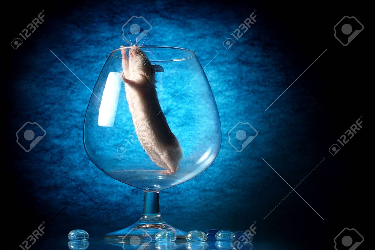 White mouse sit in glass Stock Photo - 3279214