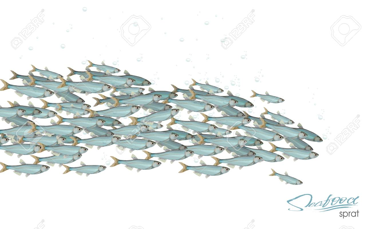 School of fish vector illustration for header, web, print, card and invitation. Plenty of herring or cod moving in the sea. - 102250792