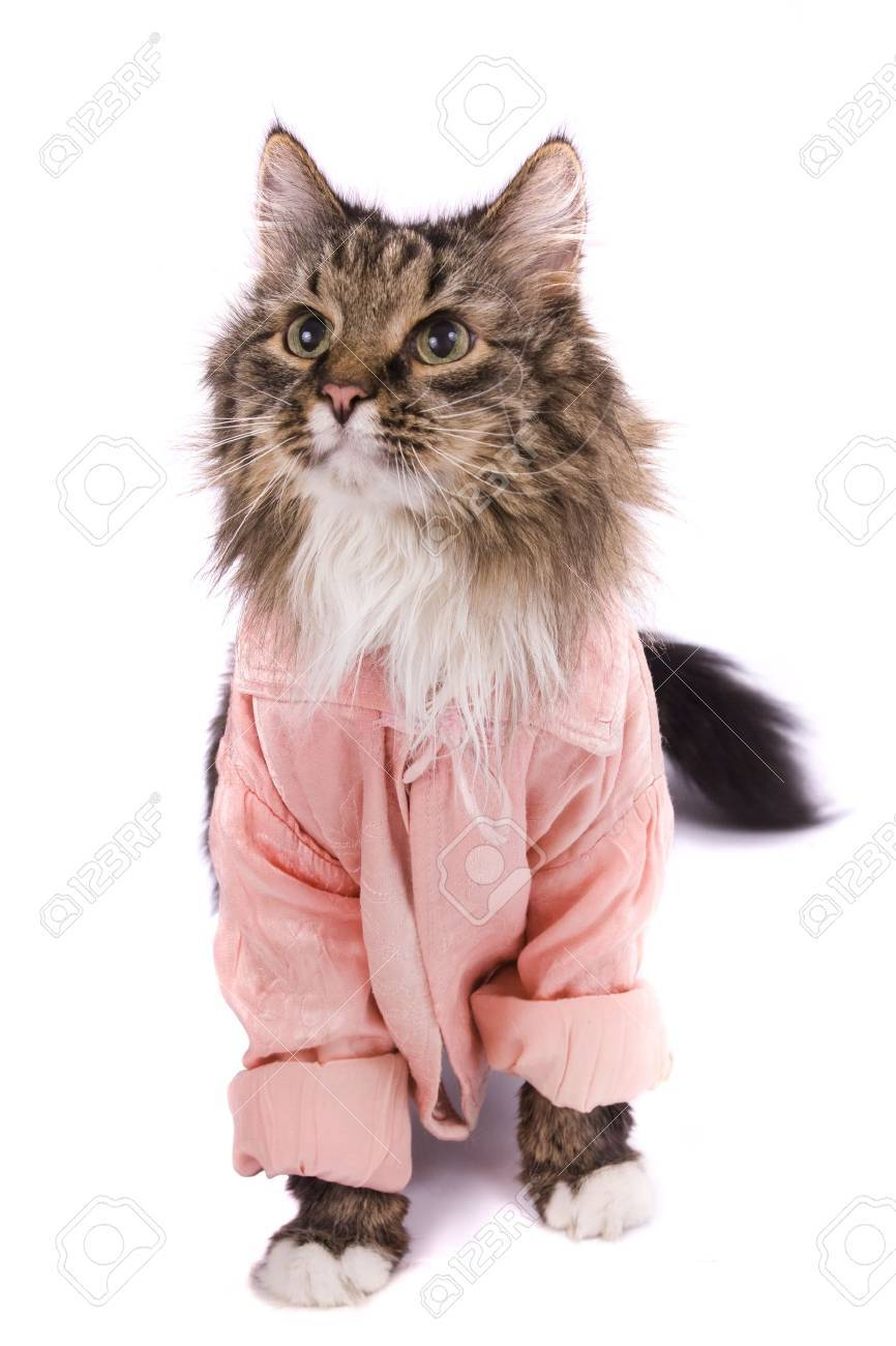 The cat clothed pink bathrobe. Pussy cat in bathrobe.  Isolated on a white background. Stock Photo - 5254281
