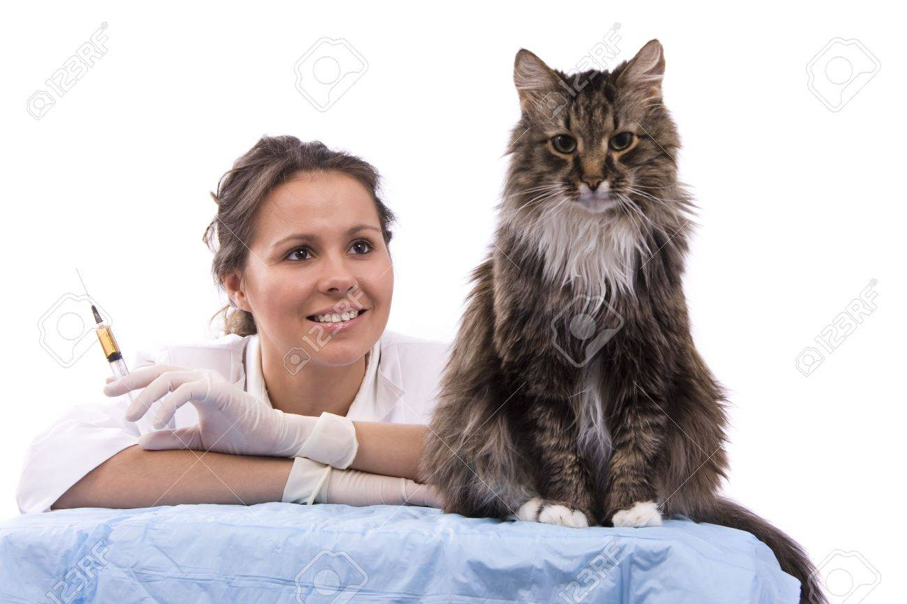 Pretty vet with syringe is looking at the feline subject.  Veterinarian have a  medical examination a cat. White background. Stock Photo - 6307816