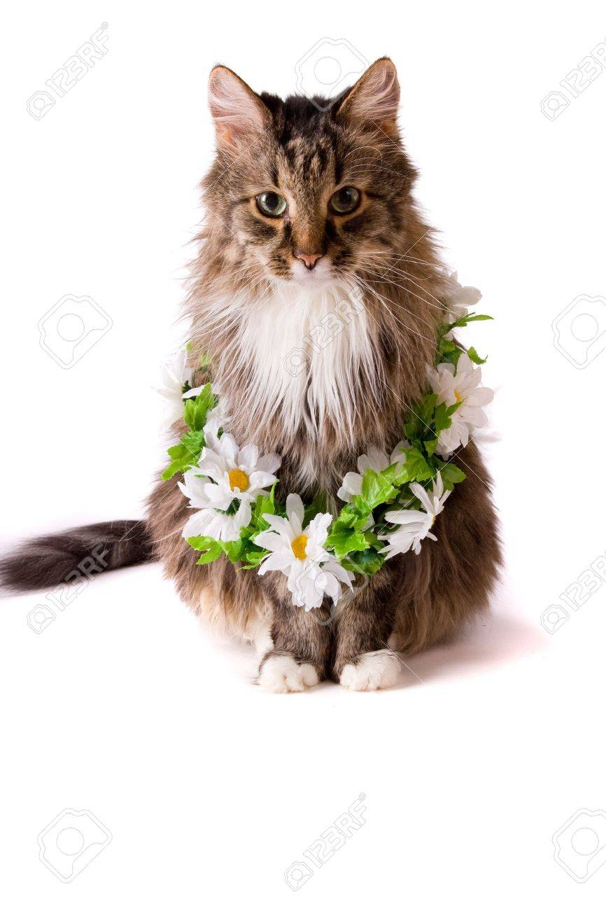 Cat with garland is sitting on white background Stock Photo - 7311177