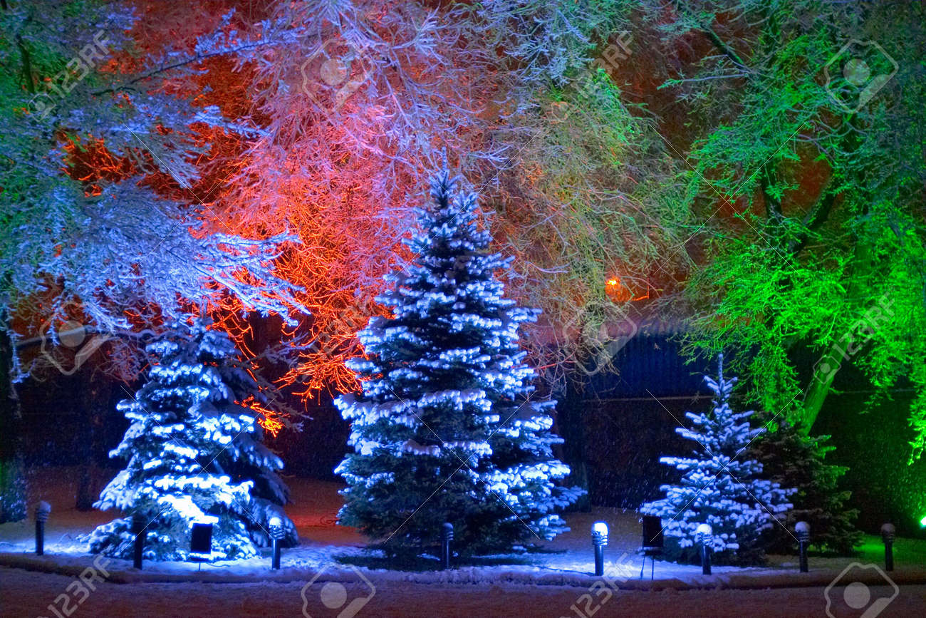 Magic Christmas tree Stock Photo - 351560