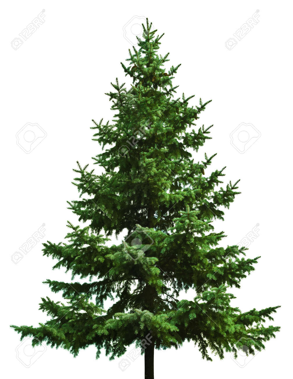 The Bare Christmas Tree Ready To Decorate Stock Photo Picture And