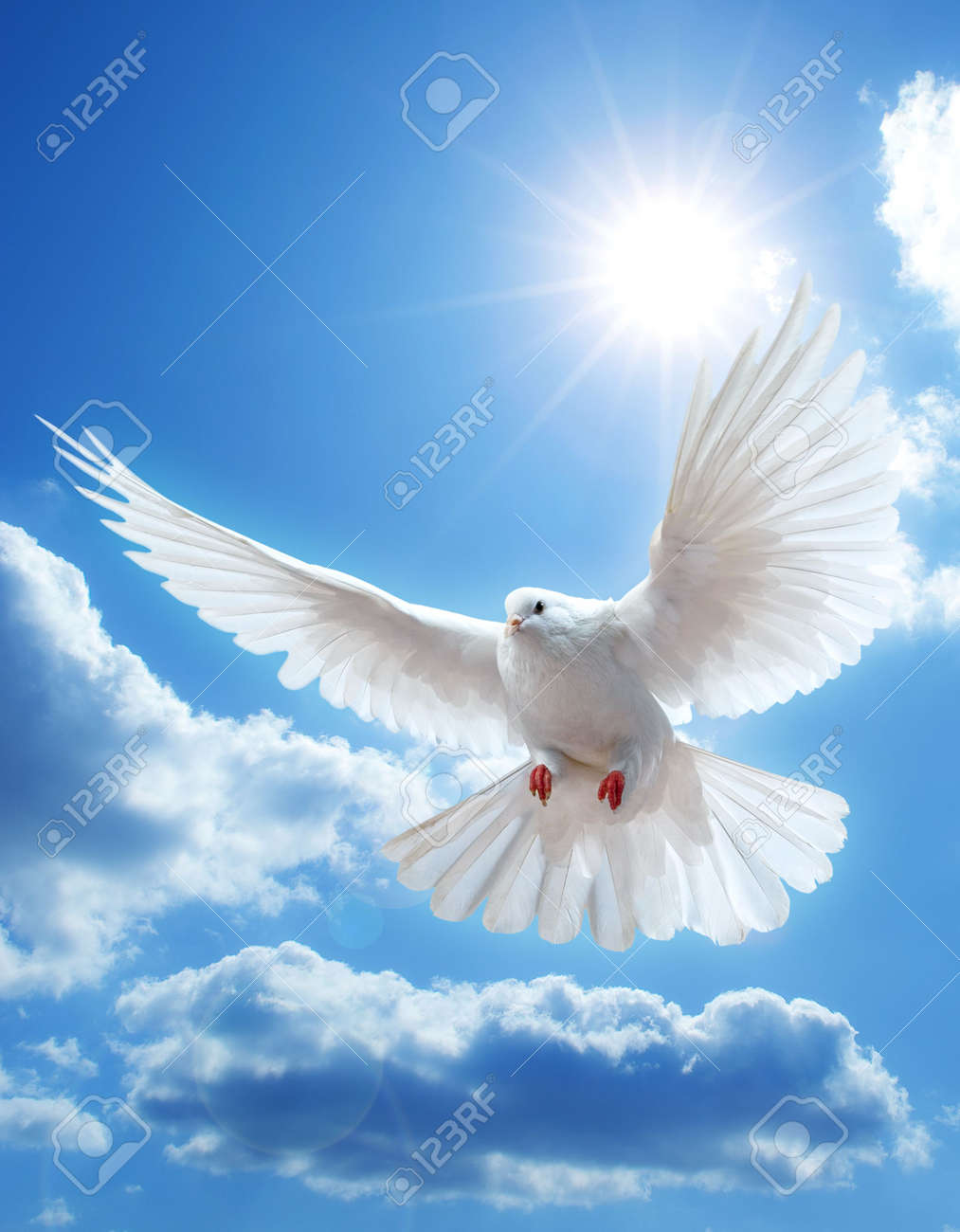 Dove in the air with wings wide open in-front of the sun - 5888785