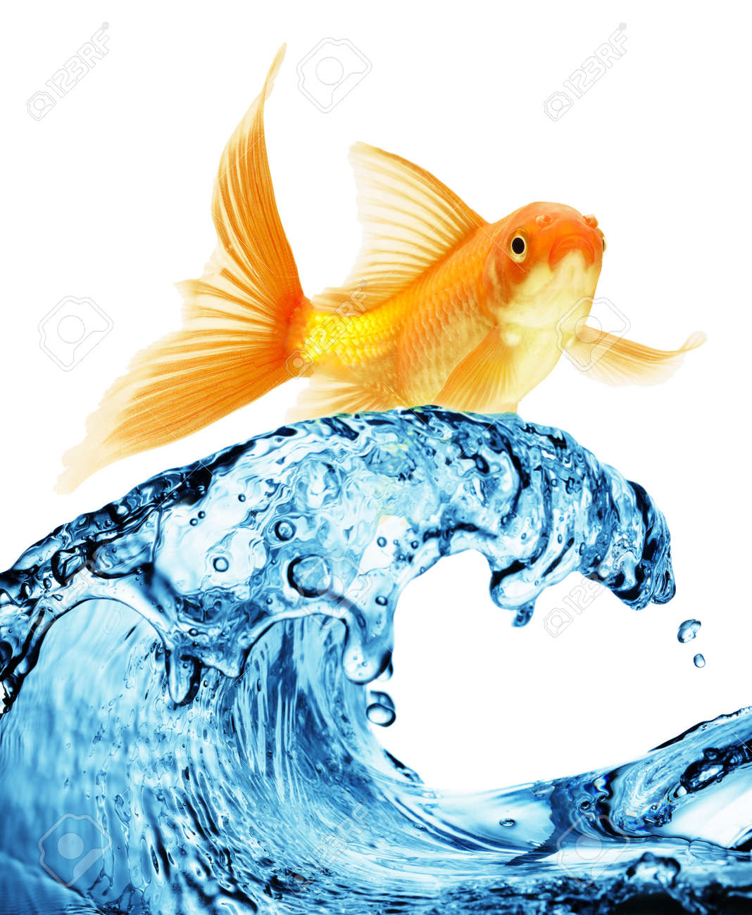 A goldfish jumping out of the water to escape to freedom. White background. Stock Photo - 7523964