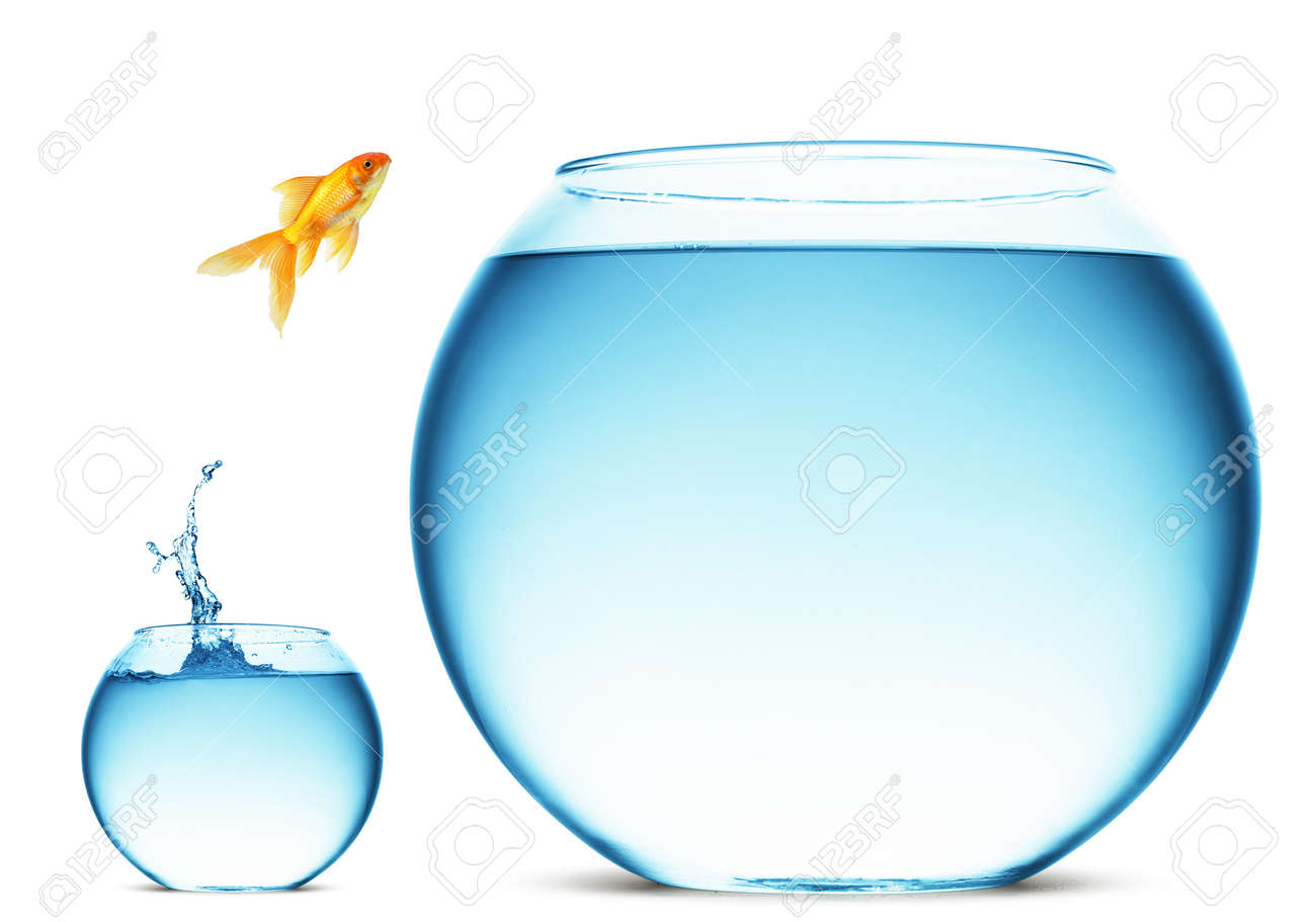 A goldfish jumping out of the water to escape to freedom. White background. Stock Photo - 7939873