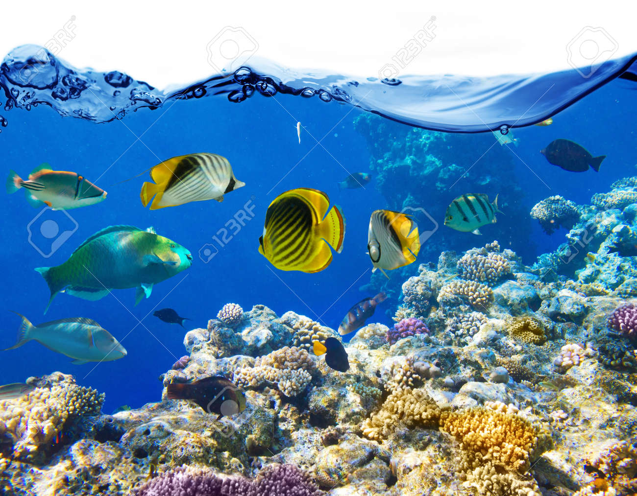 Coral and fish in the Red Sea Egypt Stock Photo - 21222237