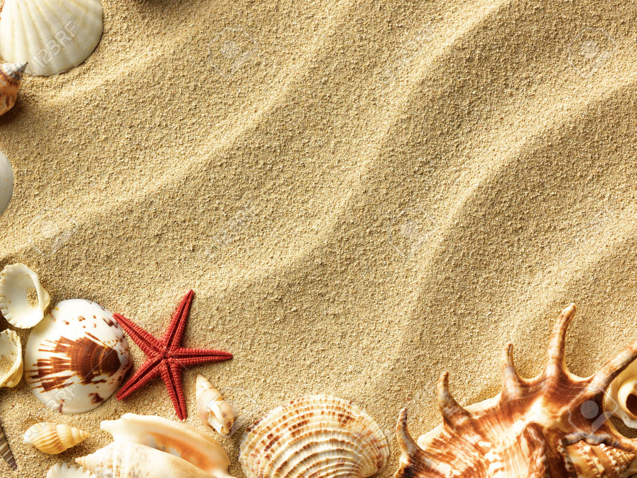 Sea Shells With Sand As Background Stock Photo, Picture And ...
