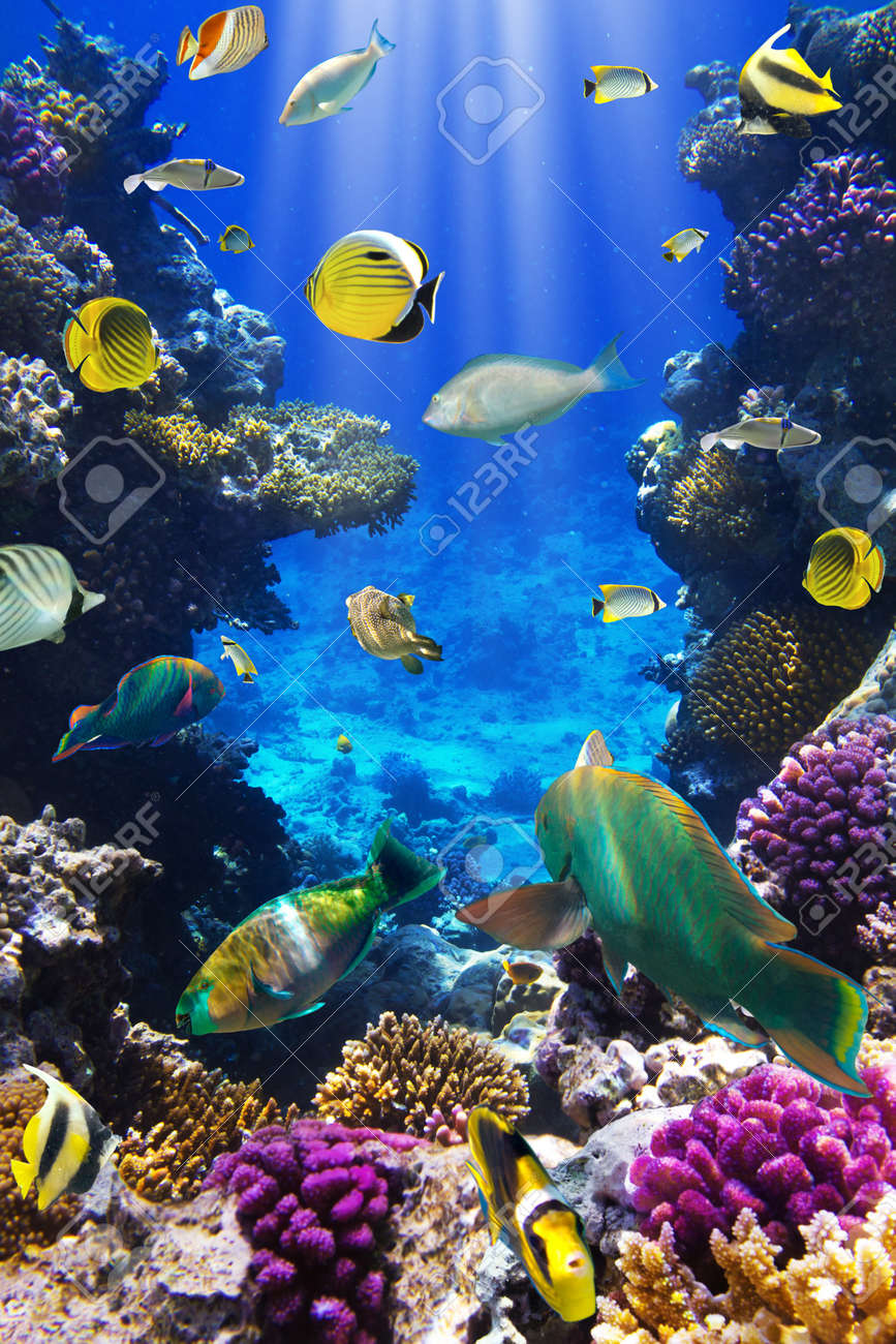 Photo of a tropical Fish on a coral reef Stock Photo - 12569145