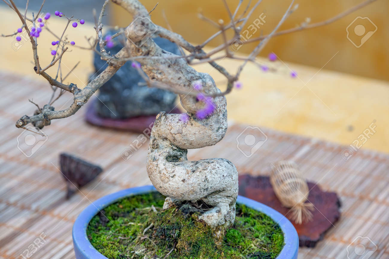 Miniature plant grown in a tray according to Japanese bonsai traditions - 160577238