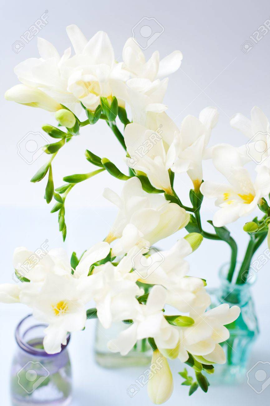 White Freesia Flowers In Decorative Bottles Stock Photo Picture And