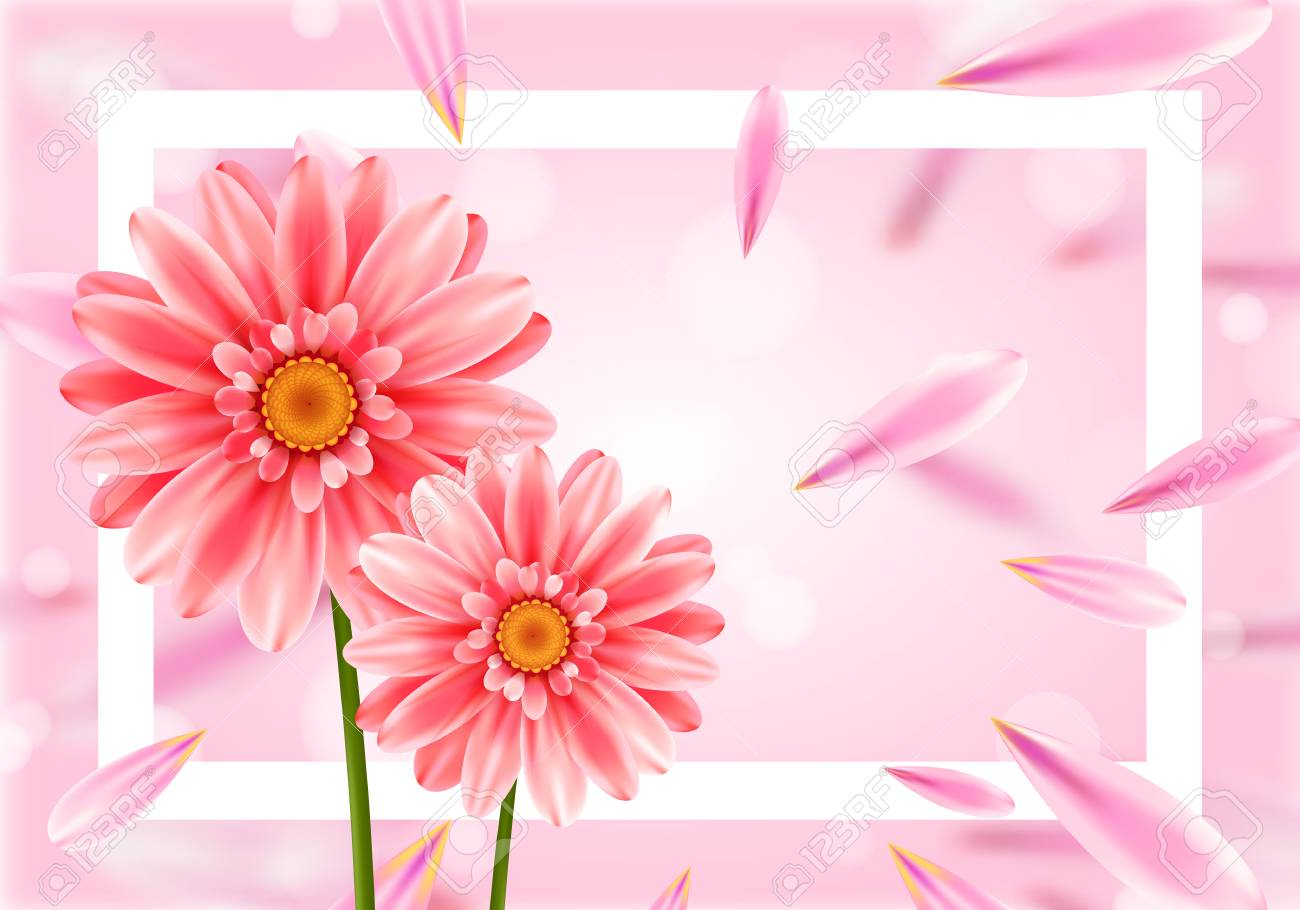 Gerbera Flower On Bright Pink Background Royalty Free Cliparts