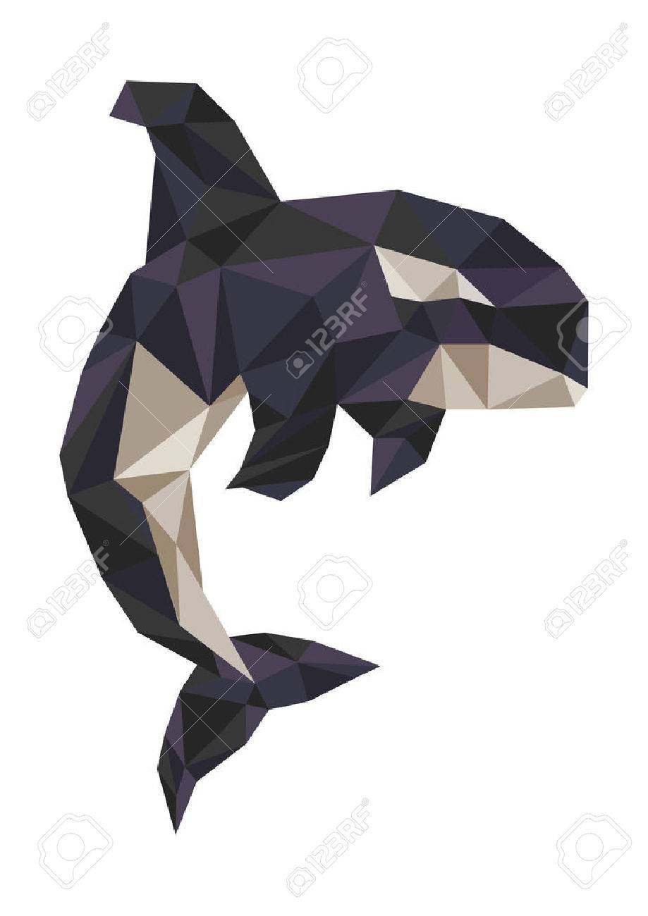 Killer Whale Stock Vector