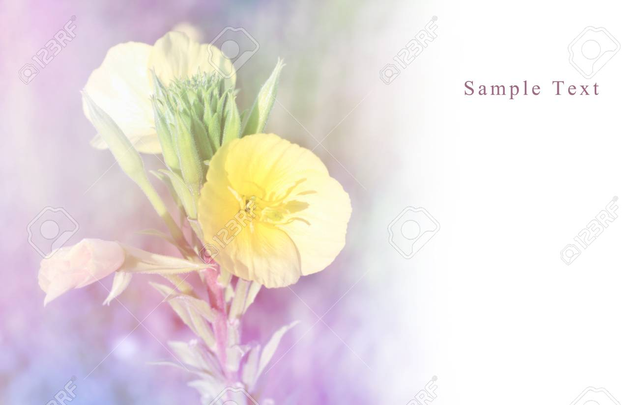 Floral background Stock Photo - 16775766