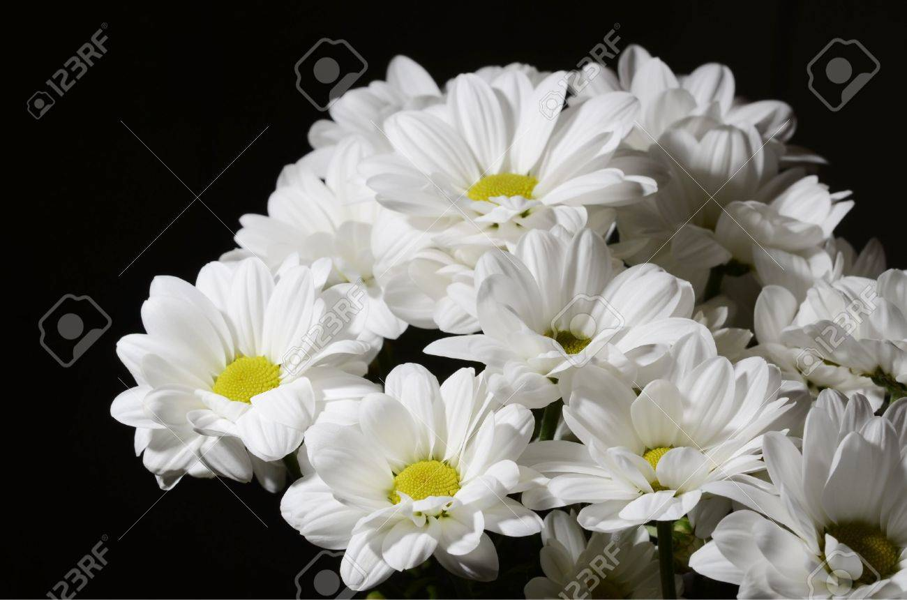 Bouquet of nice white flowers on black background stock photo bouquet of nice white flowers on black background stock photo 13241220 mightylinksfo