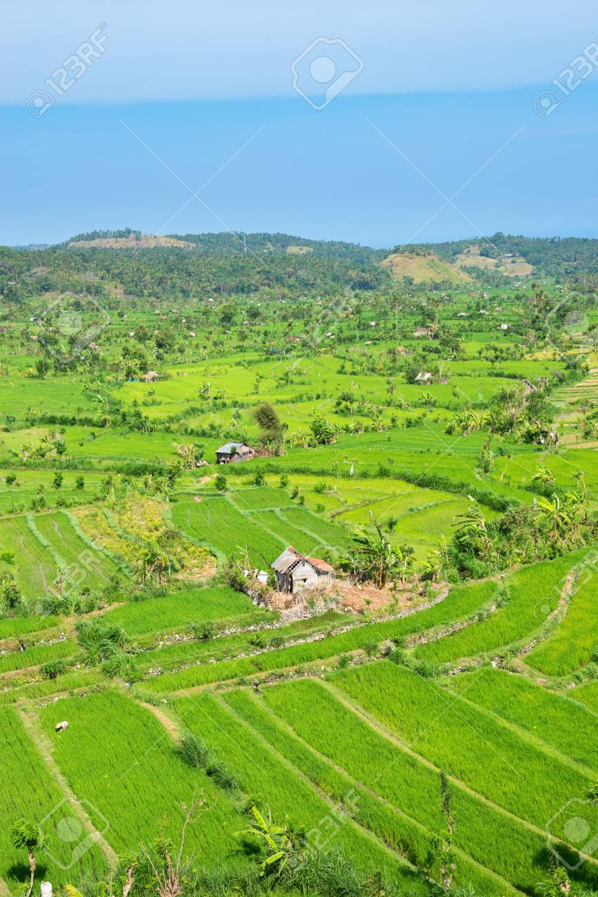 Green rice fields terraces and shacks, Bali, Indonesia Stock Photo - 16385890
