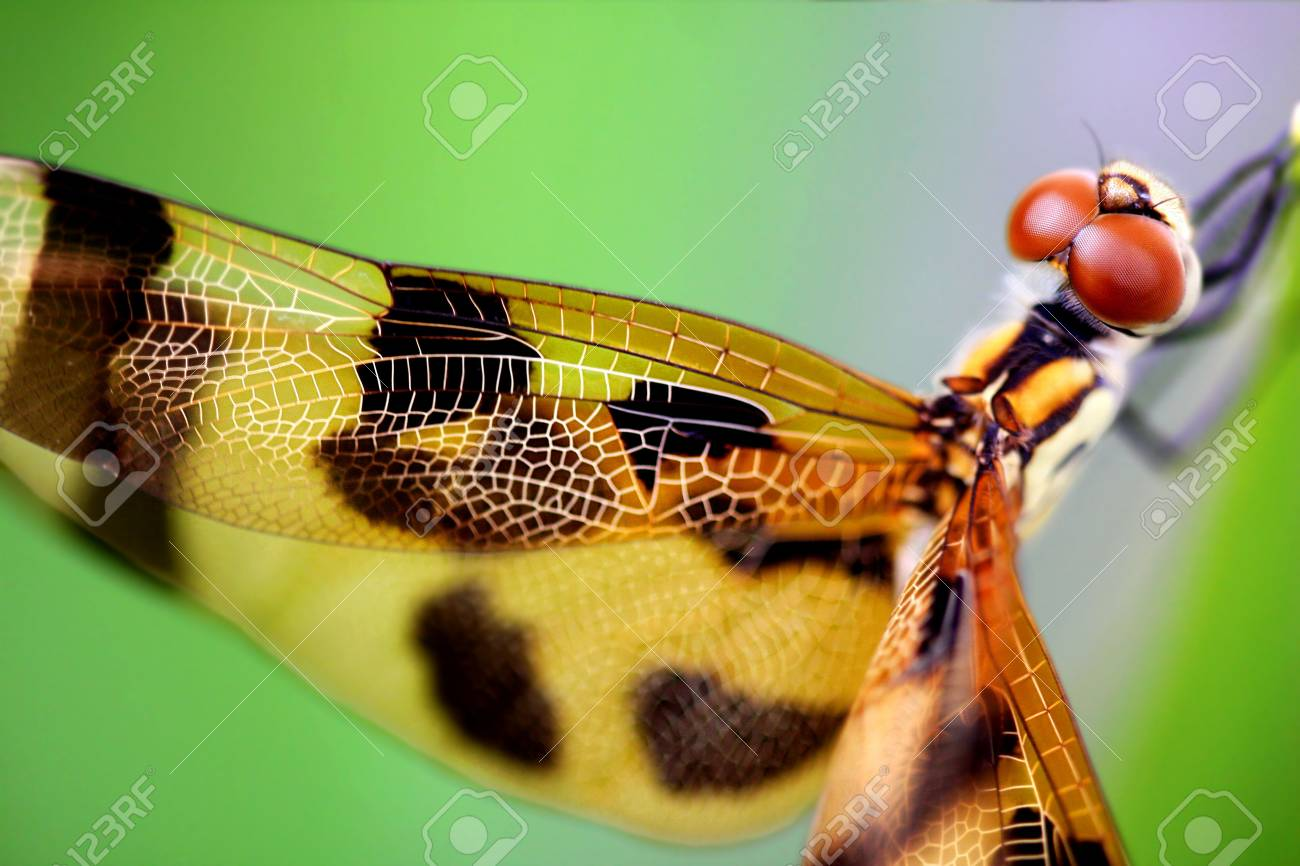 Beautiful brown dragonfly close up Stock Photo - 5274693