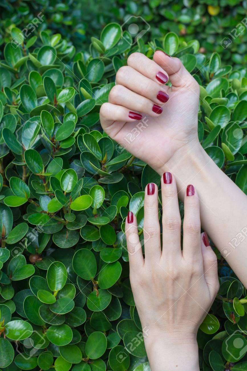 Mujeres Hermosas Manos Con Uñas De Color Rojo En Una Nueva Hojas ...