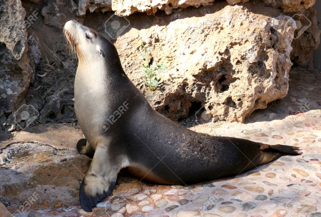 sealion basking in the sun at the zoo Stock Photo - 902412