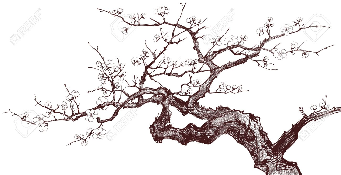 Vector Illustration D Un Arbre En Fleurs De Cerisier Dessin Encre