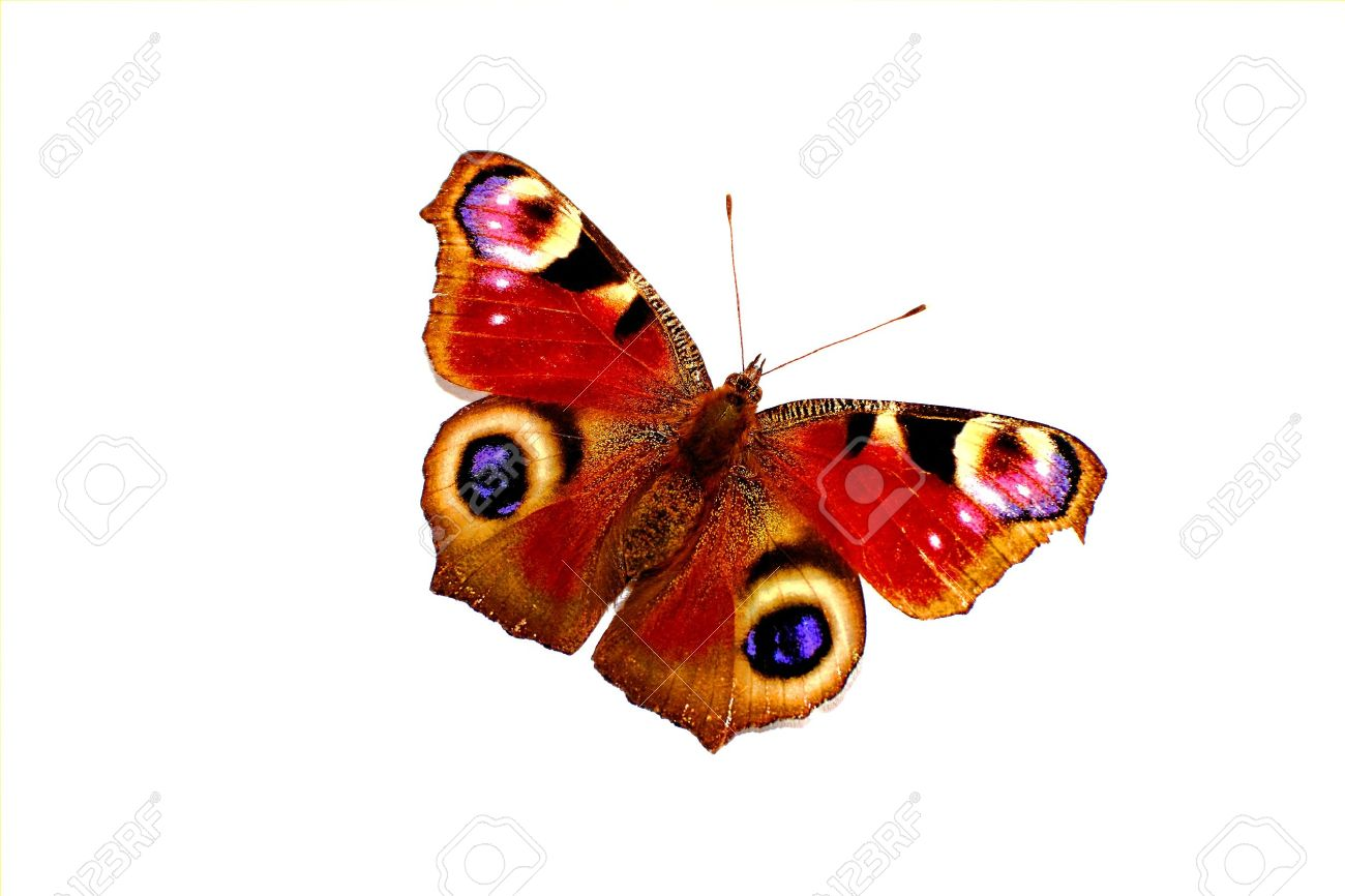 Colorful butterfly isolated on white background - 9513426