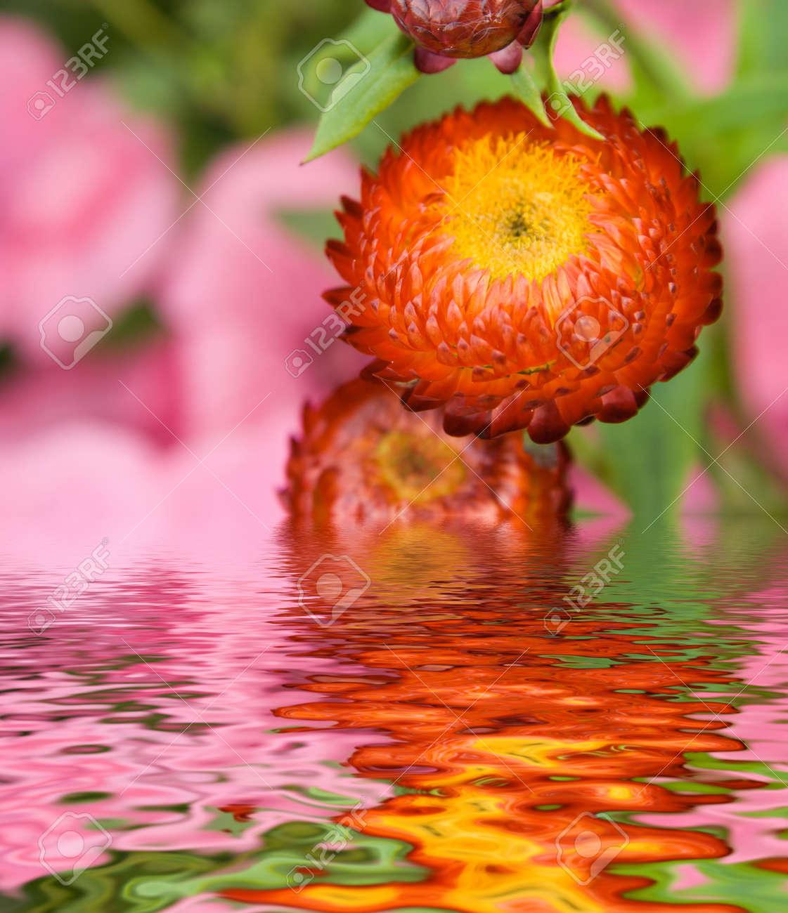 Flowers in a garden witn reflection Stock Photo - 522948