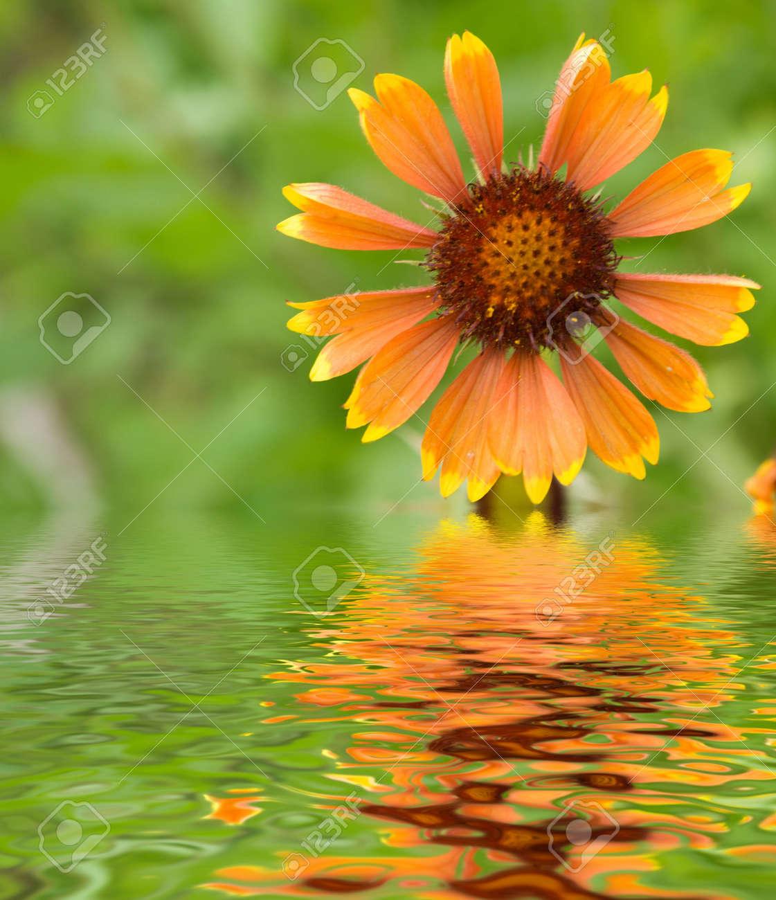 Flowers in a garden witn reflection Stock Photo - 522949