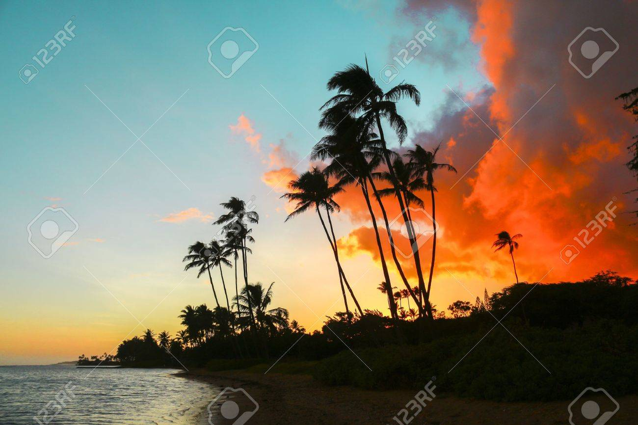 Colorful Sunset With Palm