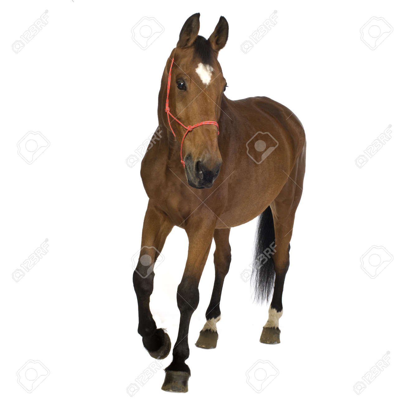 Horse in front of a white background stock photo picture and horse in front of a white background sciox Choice Image