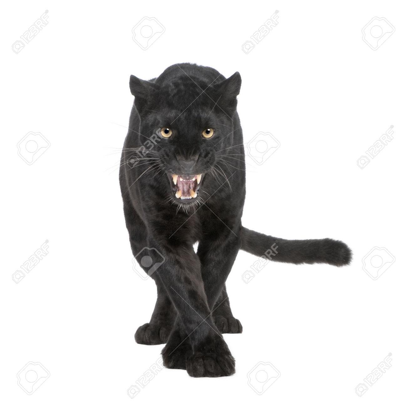 Black Panther Background Black Panther Black Leopard
