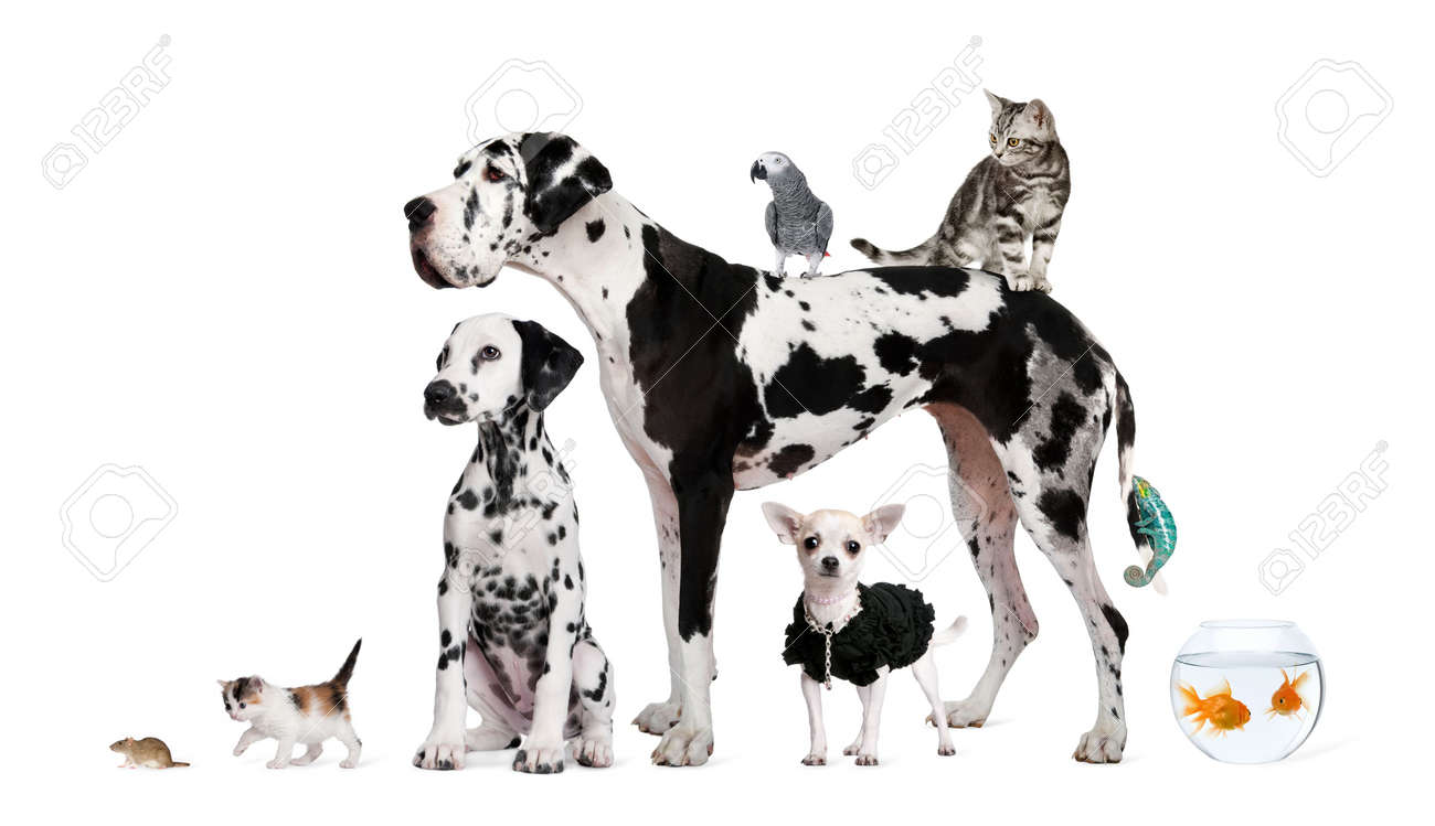 Group of pets standing in front of white background, studio shot Stock Photo - 6377784