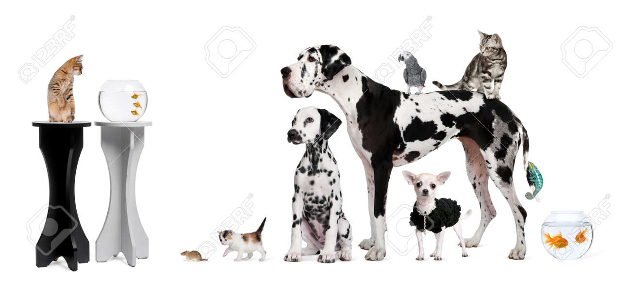 Group portrait of animals in front of black and white background Stock Photo - 7120405