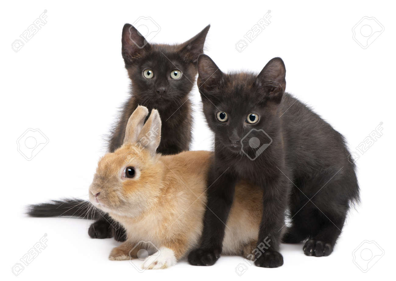 Black kitten playing with rabbit in front of white background Stock Photo - 7980168