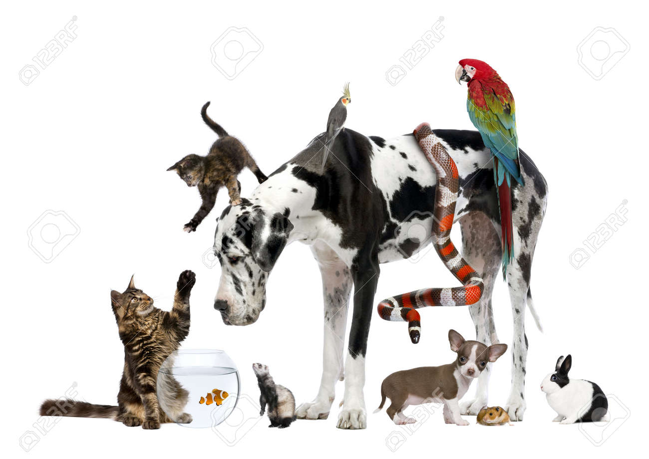 Group of pets together in front of white background Stock Photo - 7980288